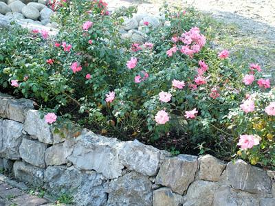 giardino+orto 17-8-08 106 (4)
