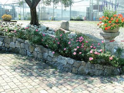 giardino+orto 17-8-08 107 (4)