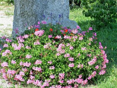 giardino+orto 17-8-08 110 (3)