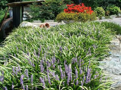 giardino+orto 17-8-08 122 (2)